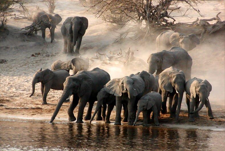 elephant-waterhole