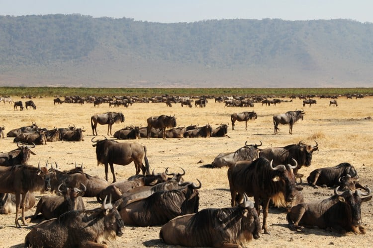GREAT-MIGRATION-WITH-DAIGLE-TOURS-#TANZANIA