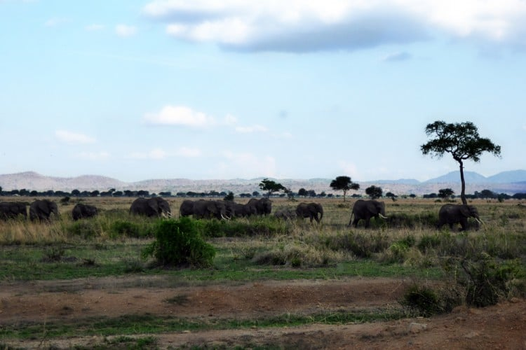 Elephants-Daigle Tours